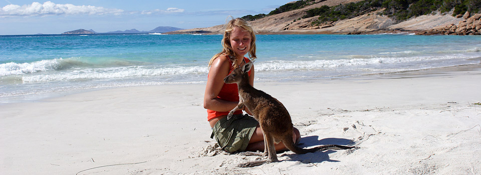 Kangaroo on the beach in Esperance, Western Australia