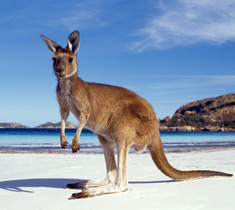 Our Special Touch, featuring a Kangaroo from Western Australia