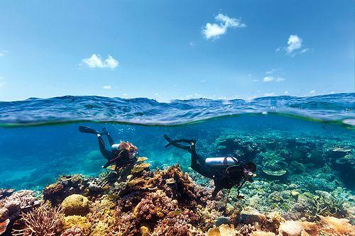 Scuba diving in Agincourt Reef