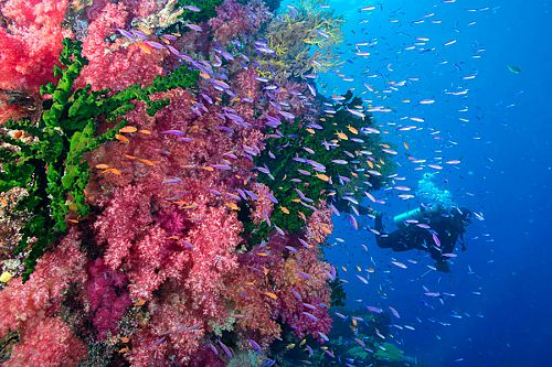 Fiji Australia Vacation Packages: Sydney, Beaches, and Diving