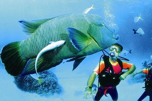 Heron Island - diving package - Great Barrier Reef - Australia Travel Expert - Australia Honeymoon