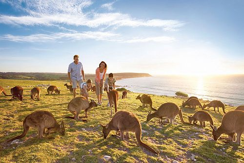 Australia Family Vacations - Kangaroo Island Wildlife Vacations
