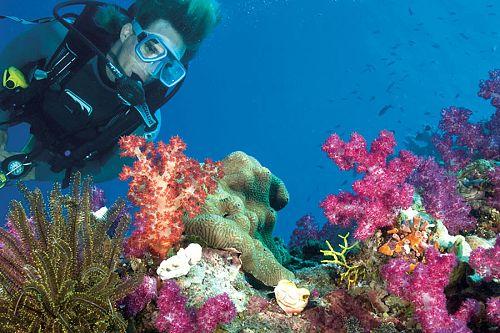 Australia Winter Getaway - Poseidon Snorkeling