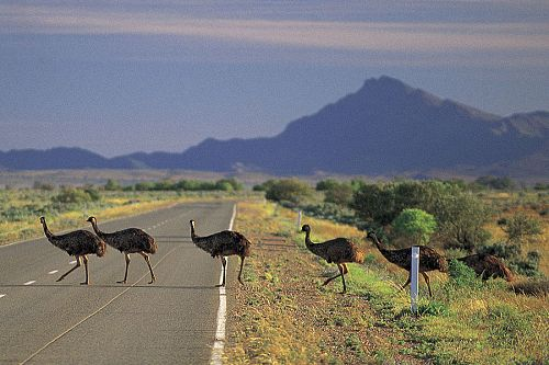 South Australia Vacation - Outback wildlife