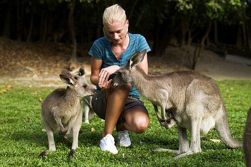 Feeding Kangaroos in Australia - Australia Getaway: Sunshine Coast and Kangaroo Island