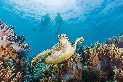 Sea Turtle in the Great Barrier Reef, Australia