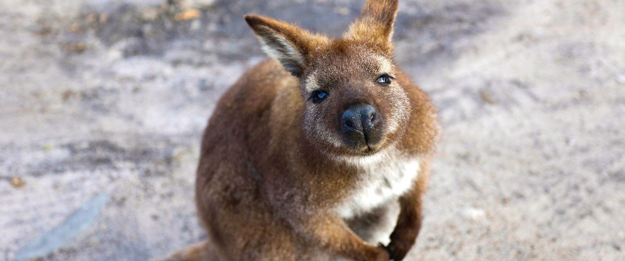 Tasmania, Australia Vacation: Ultimate Wildlife Experience