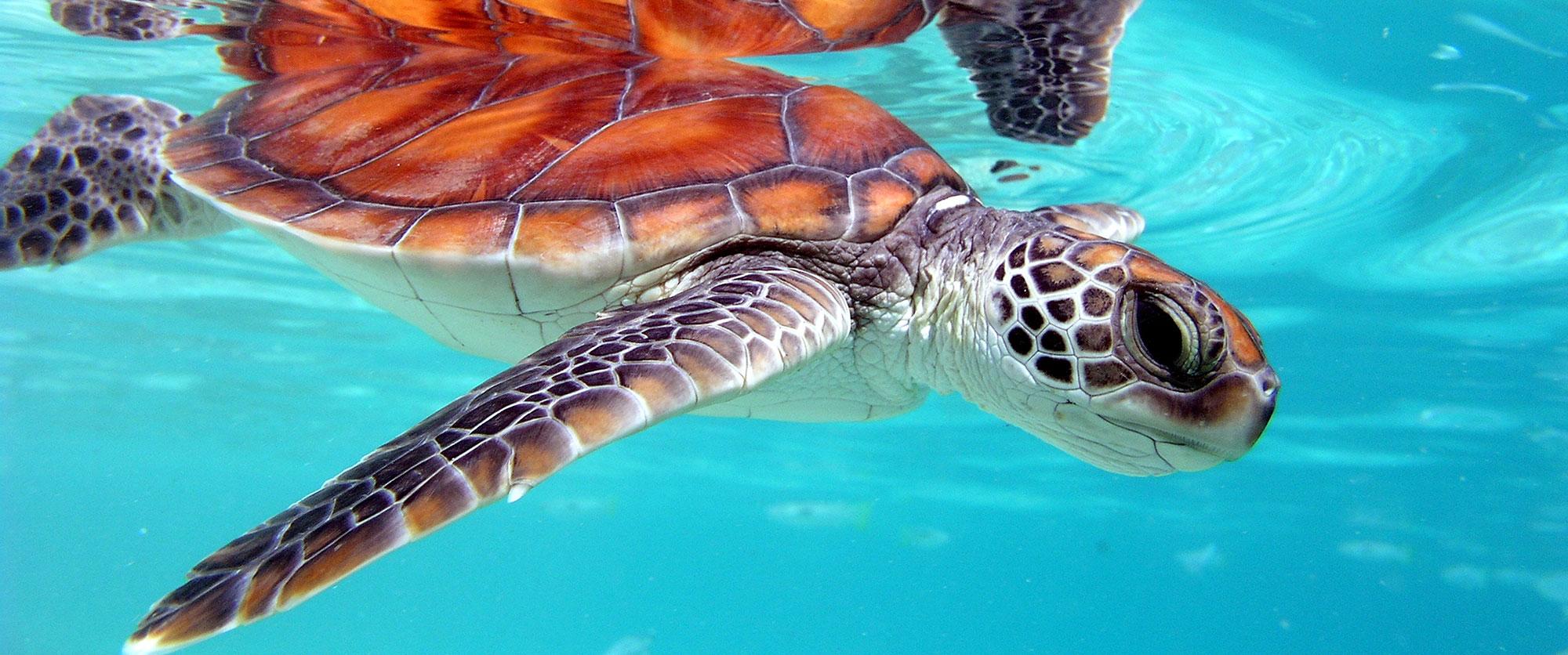 Exotic Island Vacations: Bora Bora Overwater Bungalows
