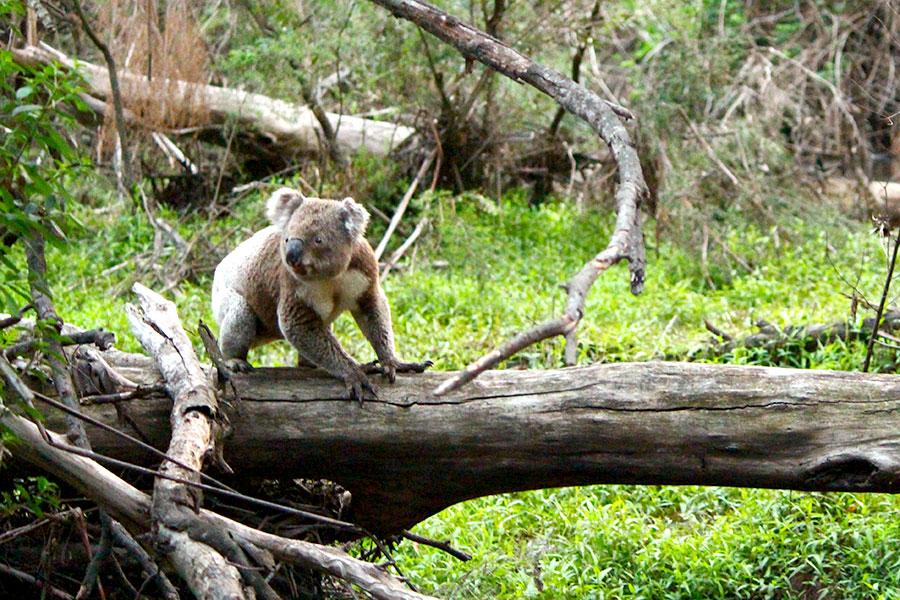 Australia Wildlife Tours - Boutique Tours