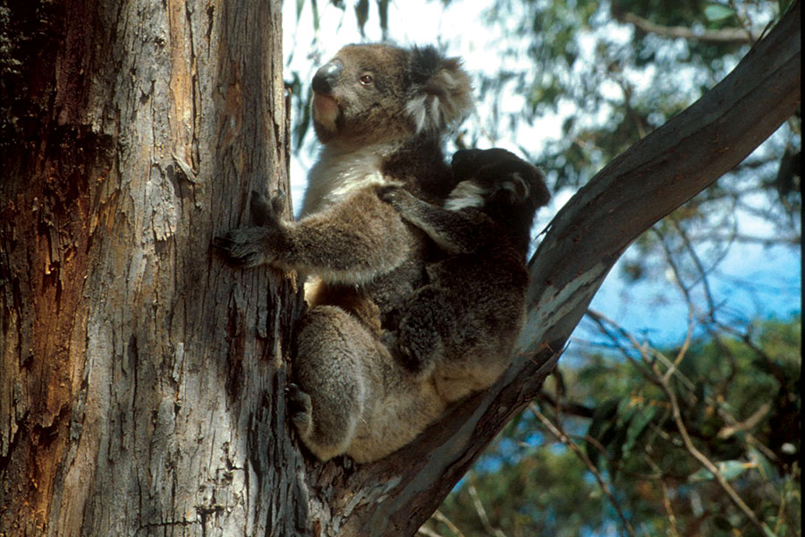 Australia Wildlife Tours - Boutique Tours