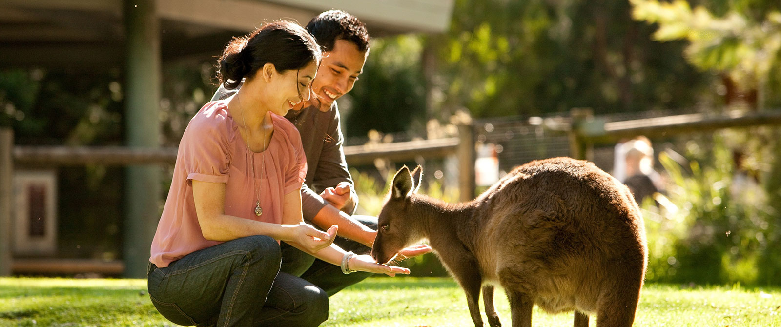 Feeding Kangaroos at Healesville Sanctuary - Best Australia Wildlife Vacations