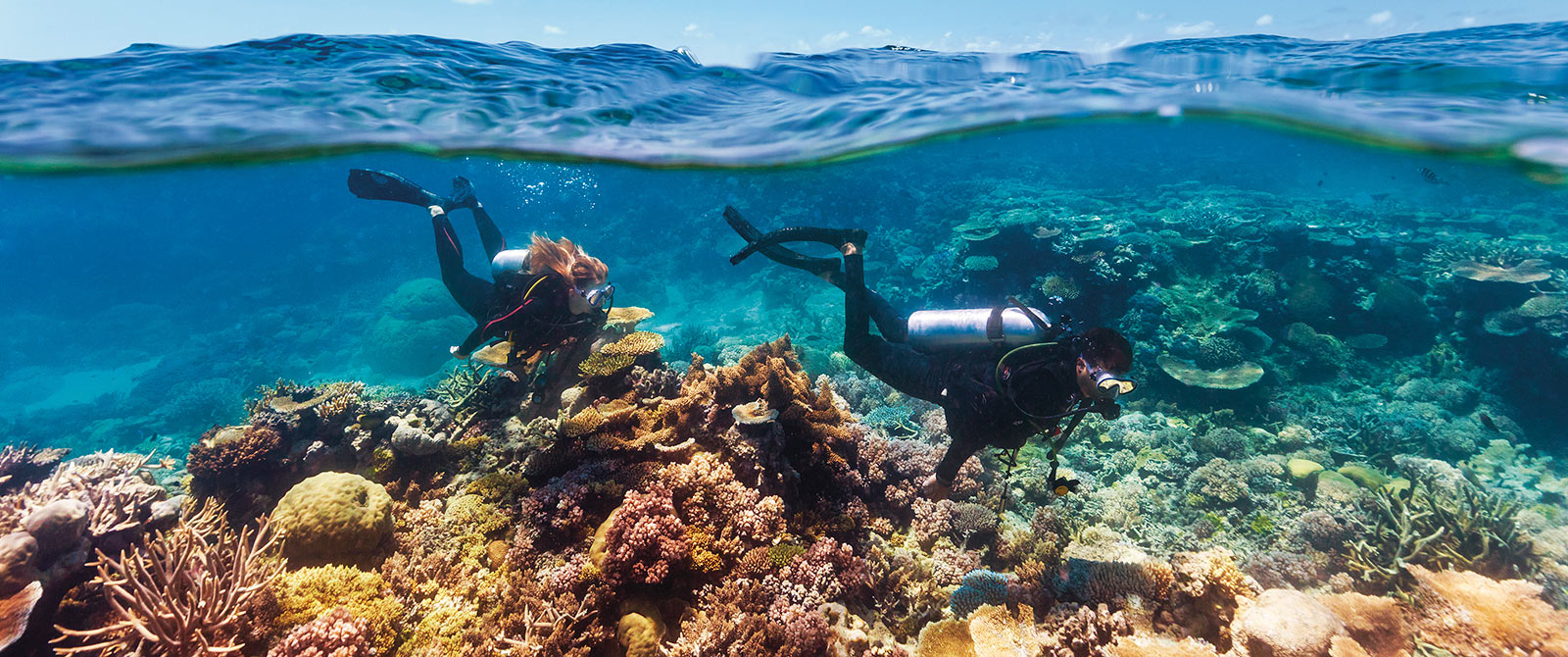 Diving the Great Barrier Reef - Australia Reef, Rainforest, and Brisbane Explorer Package